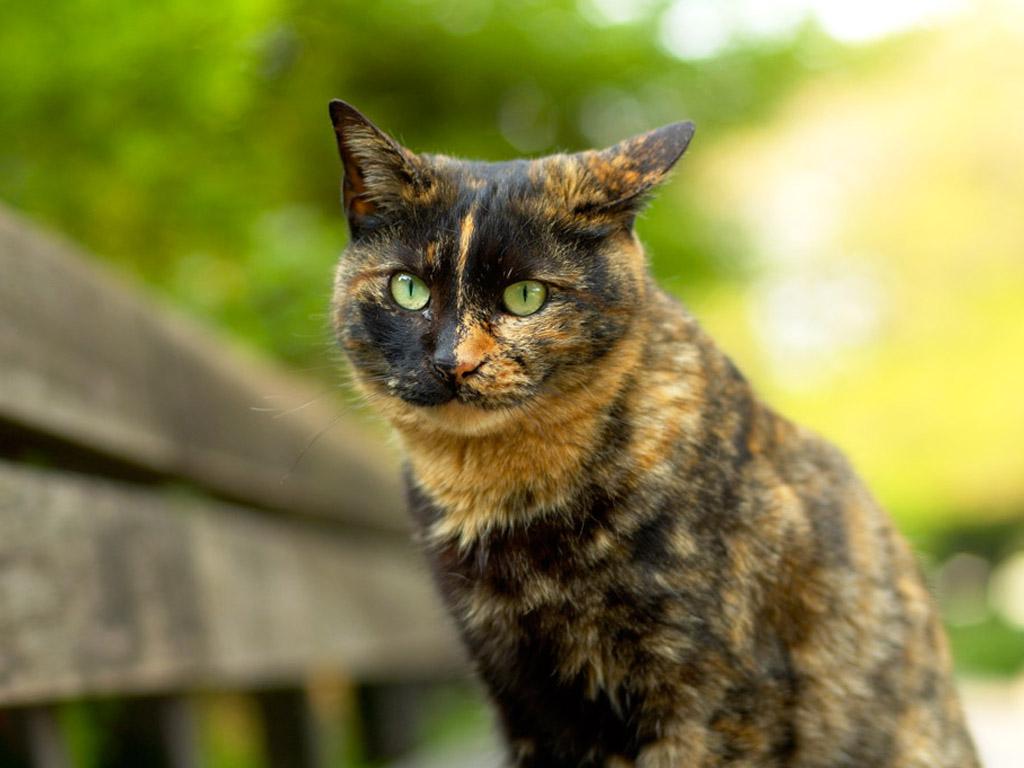 картинки с бурыми котами прозаики говорили