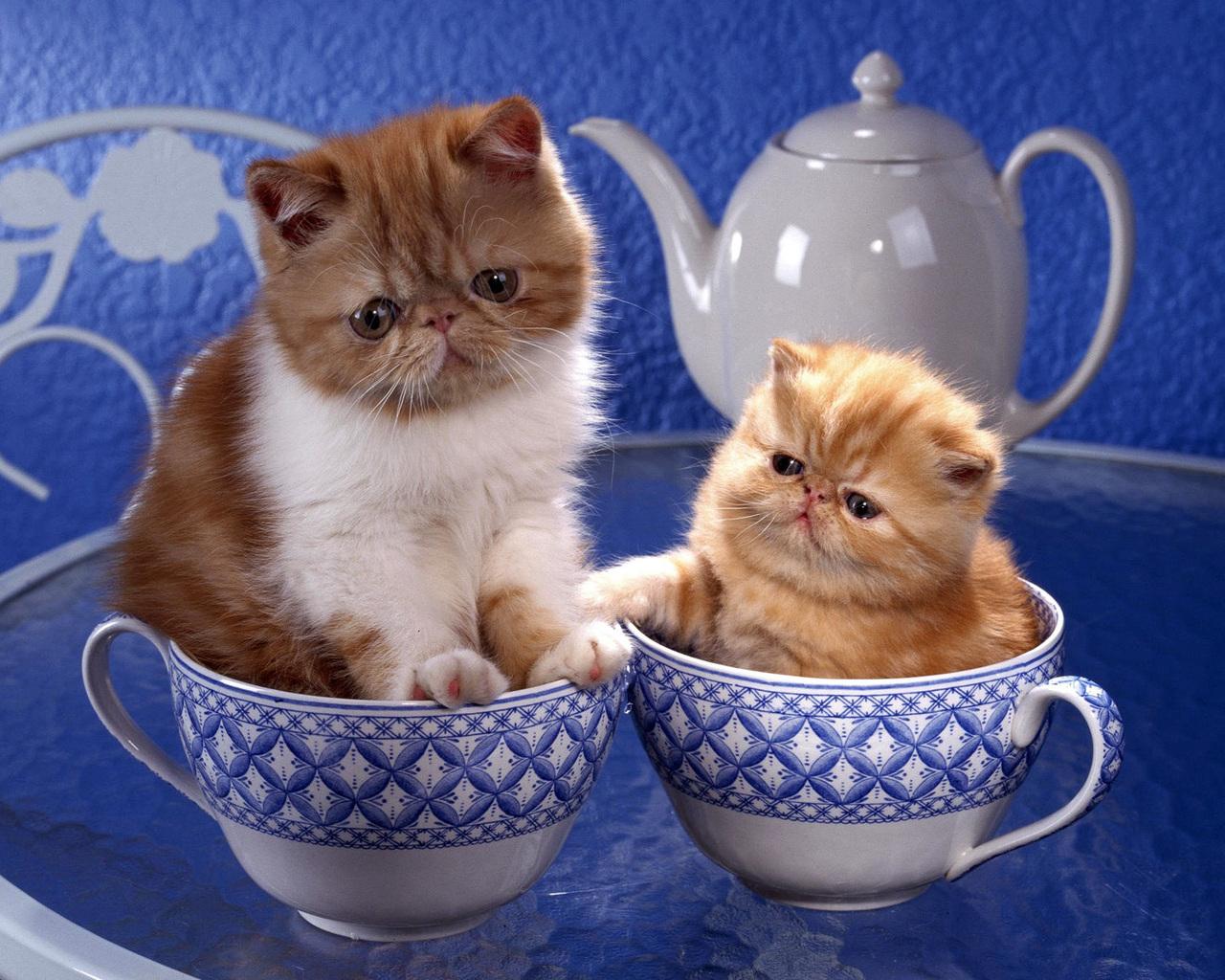 Обои На Телефон Смешные Коты