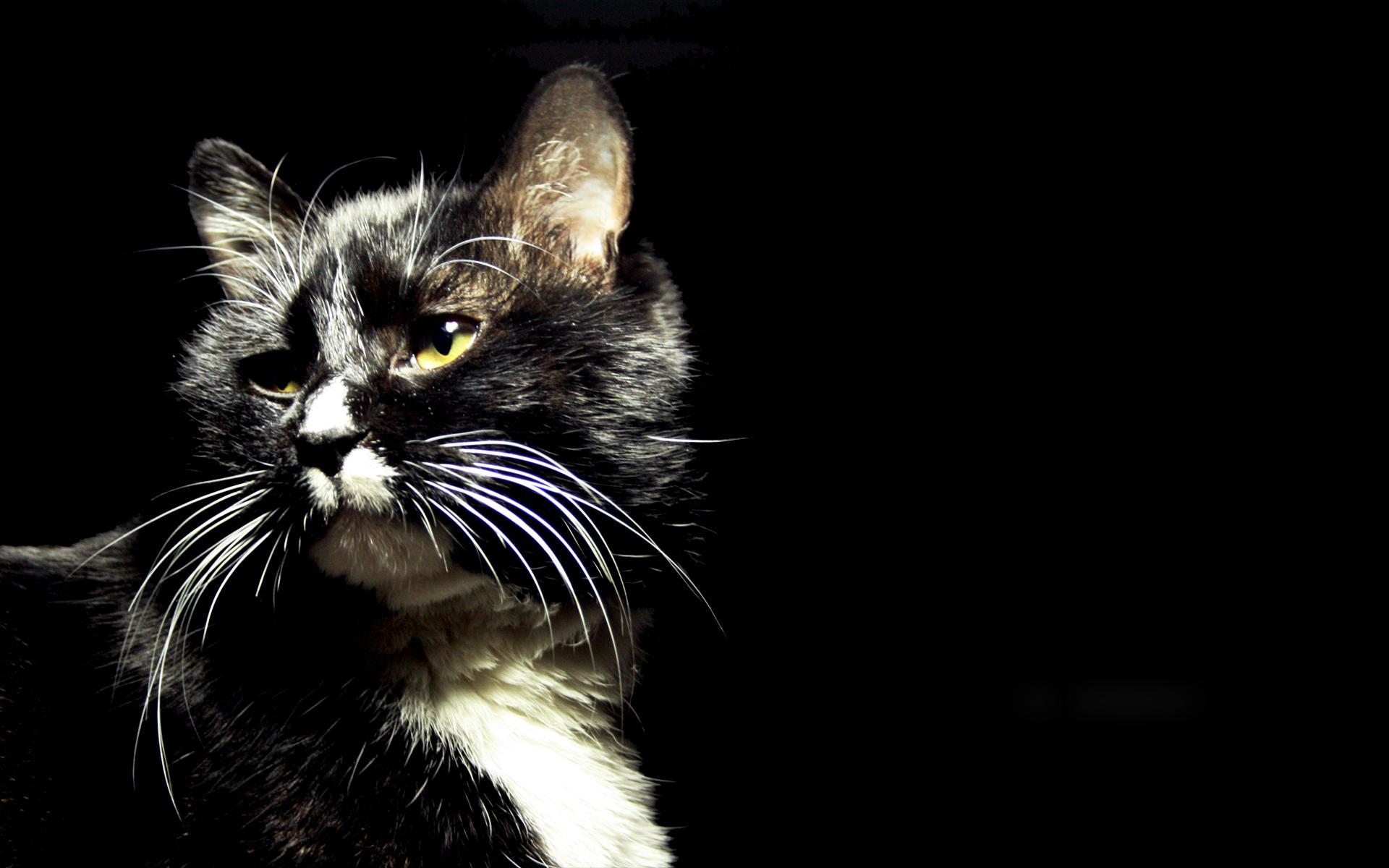 Настольная открытка, картинки с кошками и надписями на черном фоне
