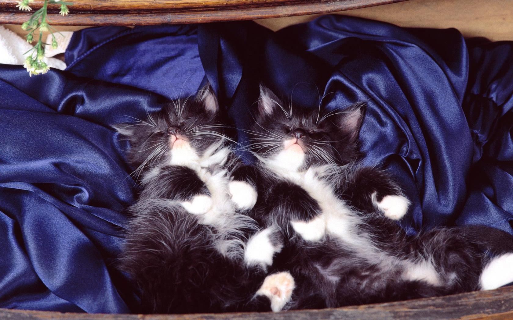 Картинки ночных котят