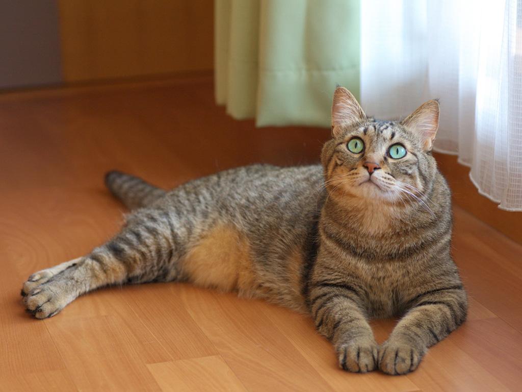 Картинки с разными кошками и надписями, руководителю благодарность картинки