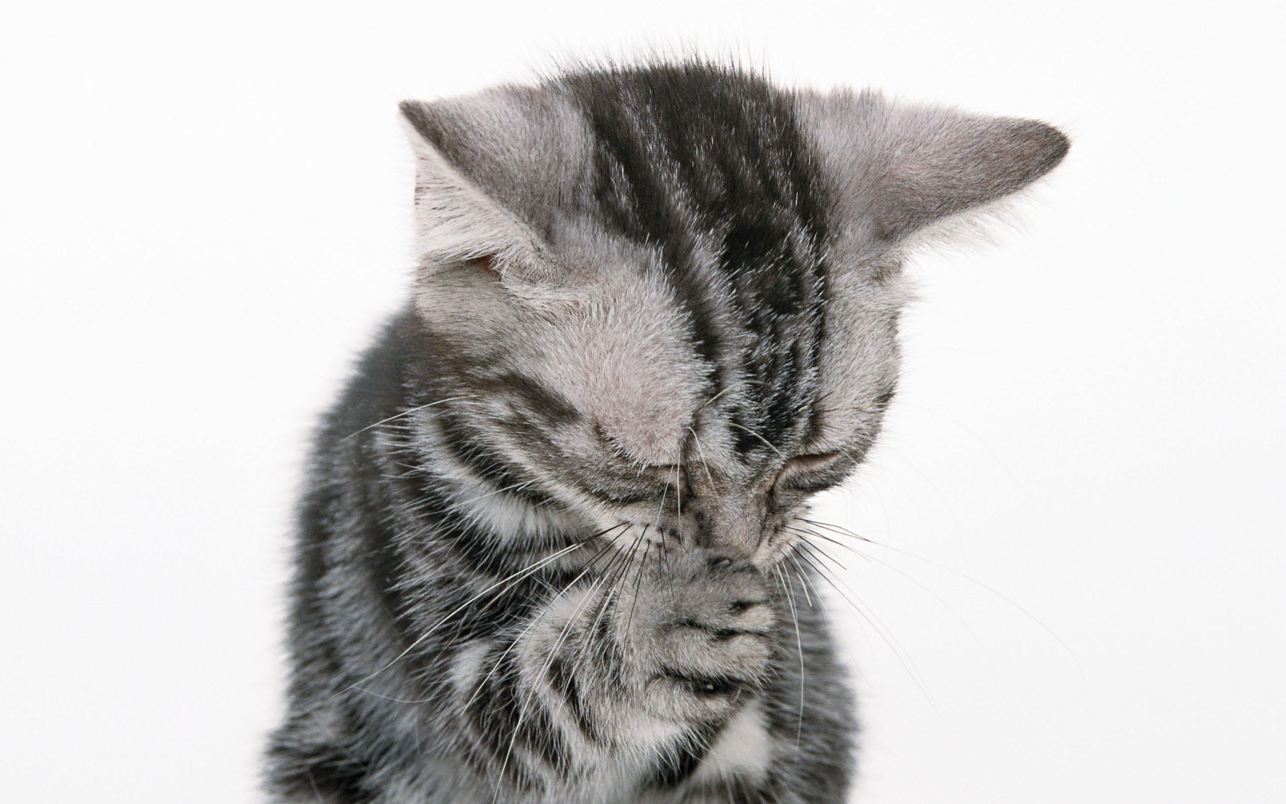 картинки с умоляющими котиками празднования имеют