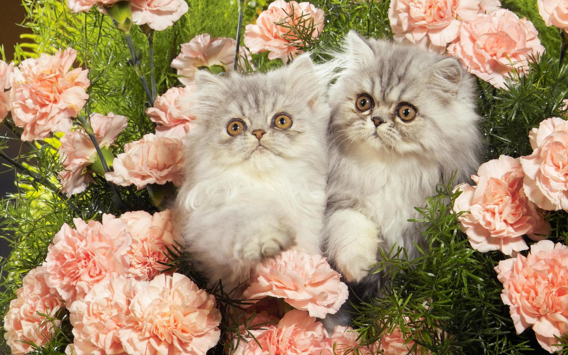 Картинки, открытки с кошками фото