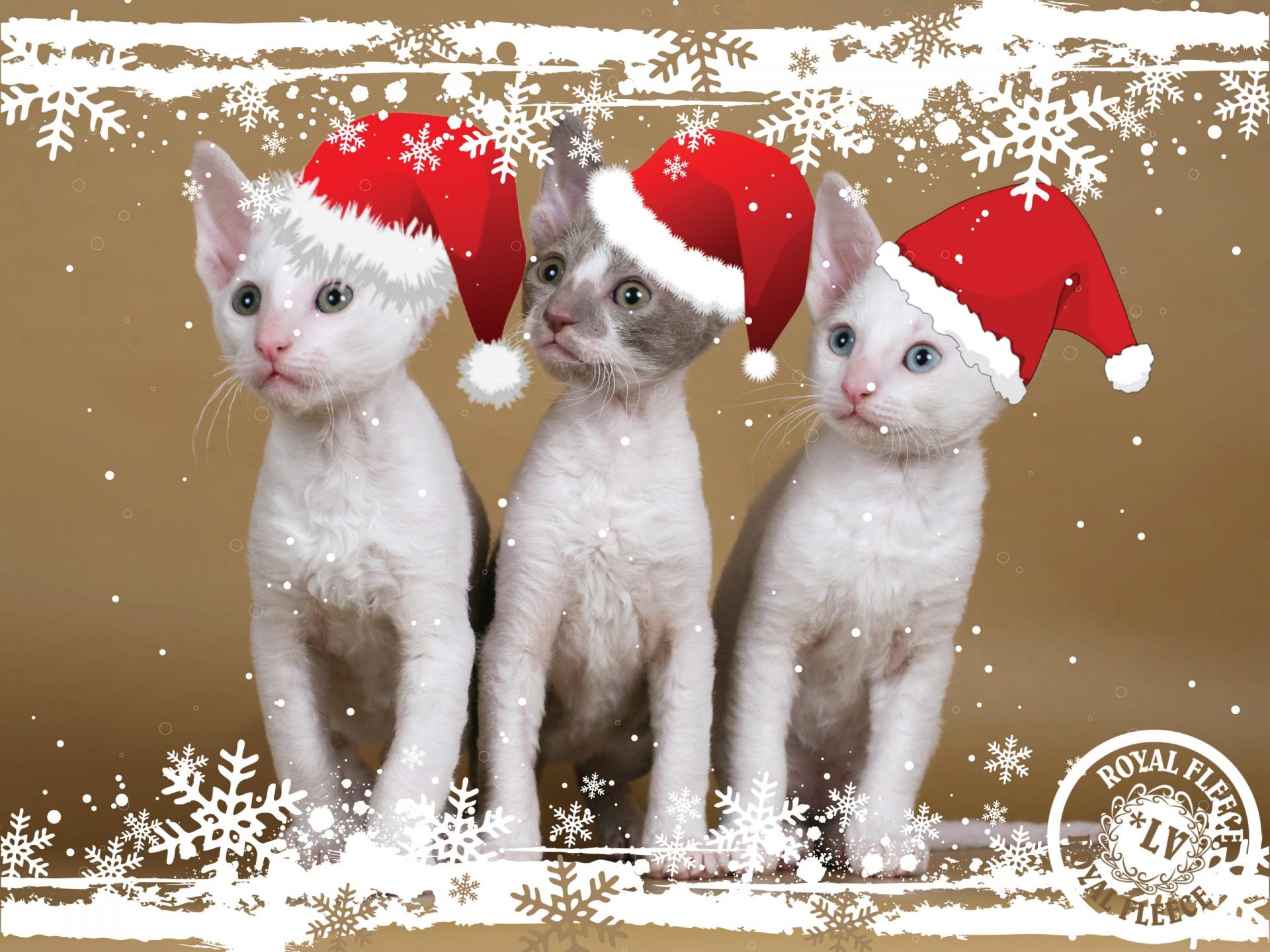Прикольные открытки год кота