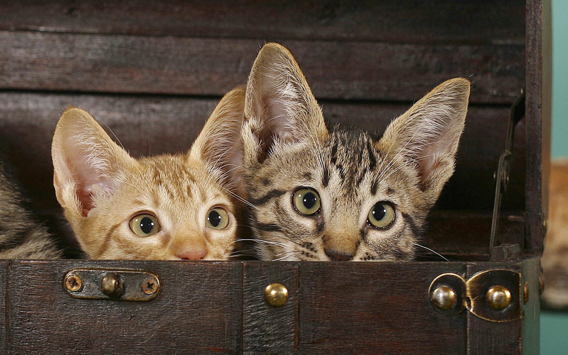 Днем, картинки с разными кошками и надписями